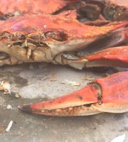 ‪Captain Catoctin's Crabs and Concoctions‬