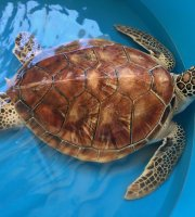 Bora Bora Turtle Centre