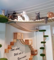 The Phuket Cat Cafe