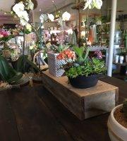 Manic Botanic Cafe