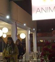 Anima Ibiza
