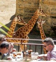 Le Camp des Girafes