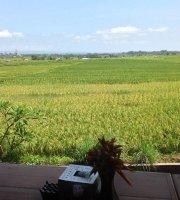 Sawah Bali