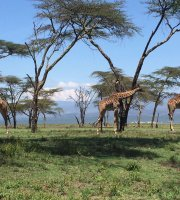THE 5 BEST Parks & Nature Attractions in Naivasha - TripAdvisor