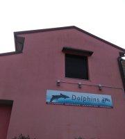 Bar Dolphins