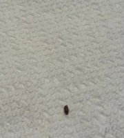 Tiny Mites In Bathroom Small Mites In Bathroom Awesome Of Little Black Bugs Tiny Red Bugs In Kit Picture Of Spice Grove Hotels Resorts Thekkady Tripadvisor