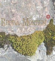 Regina Montium