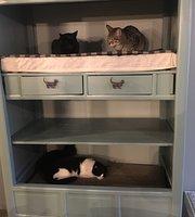 O Porto dos Gatos