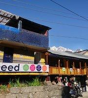 Seed Organic Cafe