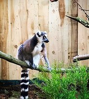 THE 10 BEST Zoos & Aquariums in Yorkshire - TripAdvisor