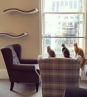 ‪Cat Cafe Liverpool‬