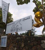 Beagle Marbella
