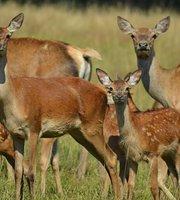 La Ferme Aux Cerfs et Aux Sangliers