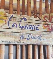 La canne a sucre