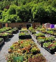 Coffi Camlan, Camlan Garden Centre & Farm Shop