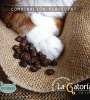 La Gatoria Cat Cafe