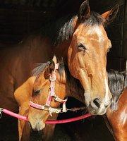 Horseback Riding Tours