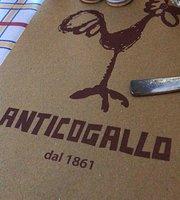 Anticogallo