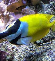 Aquarium Wilhelmshaven Bullermeck's