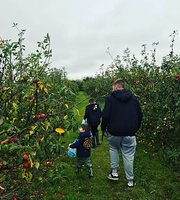 Drove Orchards