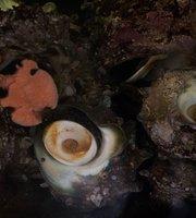 Seafood Isoya