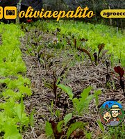 Olivia & Palito Agroecologia