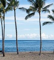 Hula Palm