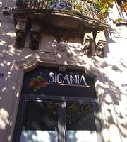 Sicania