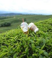 InfiniTea Teabar/ Shop