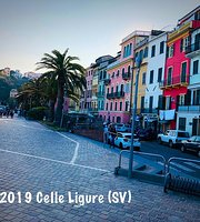 Celle ligure maggies