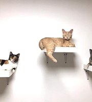 Matouccino Cat Cafe