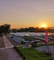 All About Me At Woodtichai Farm