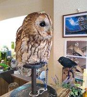Owl Cafe Wata-Wata