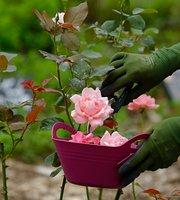 Nakai Rose Farm Hiroo