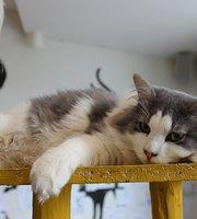 Cat-Cafe Nurri