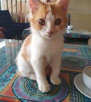 Cat Cafe Sanur