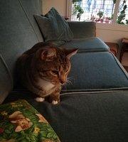 Kattencafé Skatjes