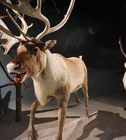 Salla Reindeer Park Cafe