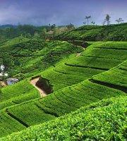 fogyókúrás tea Srí Lanka zsírégető roxylean