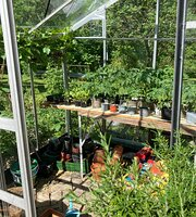 Ashpoles Tearoom Garden Take Away