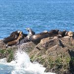 Saw sea lions during our trip to Stone Island