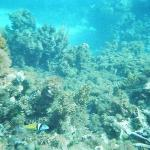 Snorkelling is awesome there too!!!