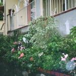 Albergo Fasce - Flowers in the Rain