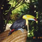 Tucan living there