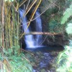 Akaka Falls State Park Photo