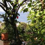 Casa Dulce Vida Garden