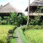 Ananda Cottages Photo
