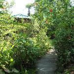 garden path to cabin