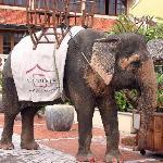 Darling - Hotel Elephant