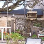 Alder Lodge Guest House patio